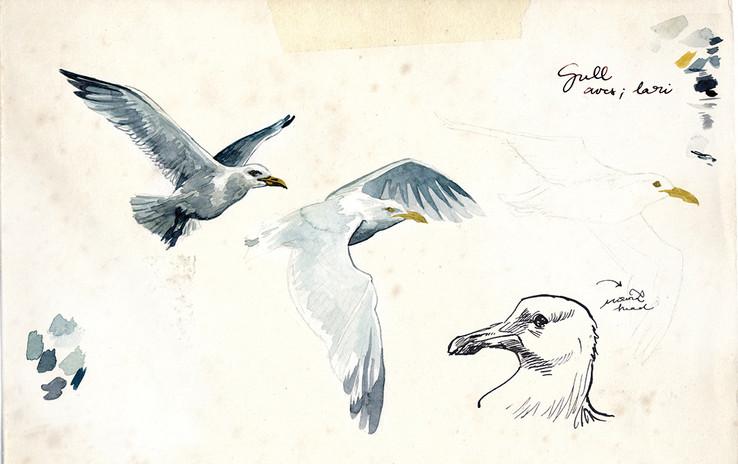 seagulls.annatromop.jpg