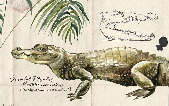 crocodile.annatromop.jpg