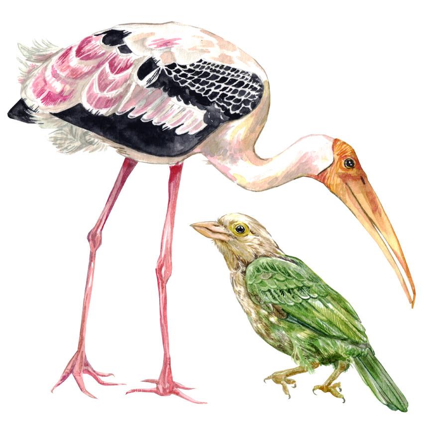 birds web.jpg