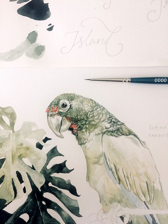 Cuban Parrot
