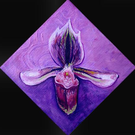 Amethyst Orchid