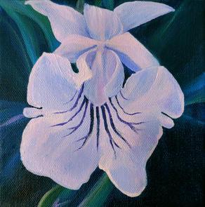 Warczewiczella Amazonica Orchid