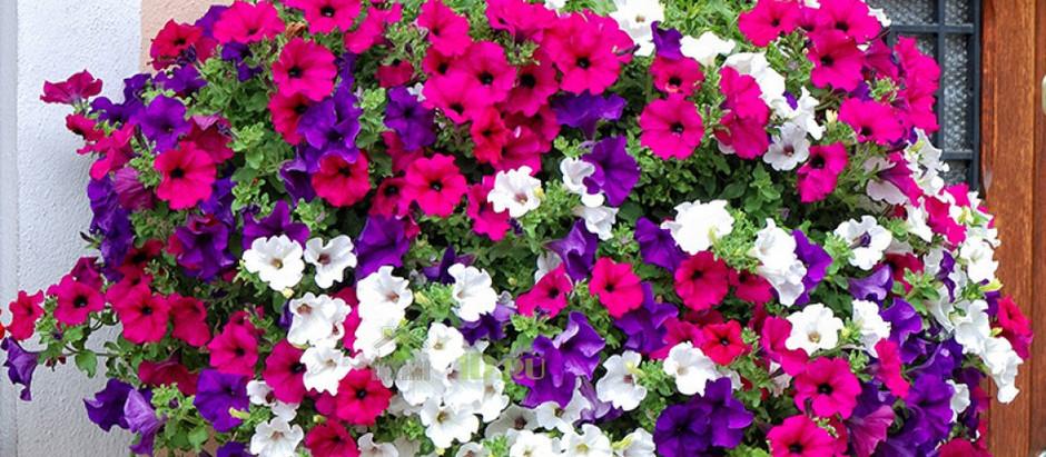 """""""Дары Вятки""""  готовы предоставить лучшую цветочную рассаду  для организаций города  и области"""