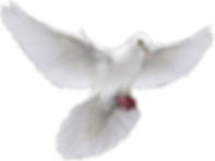 christian-dove-png-12.png