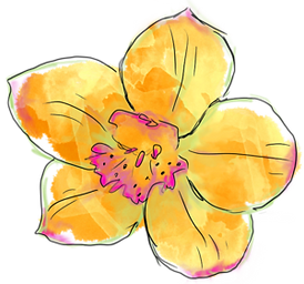 size300x300Large-Orchid_2520yellow201205