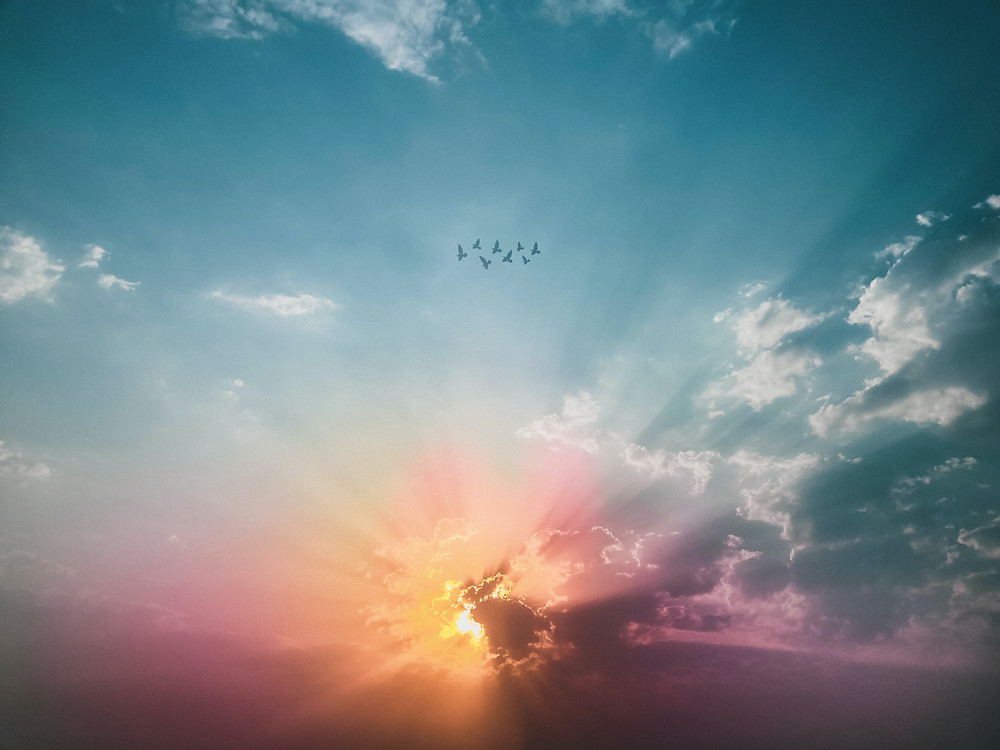 A beautiful image of the sky with a flock of birds