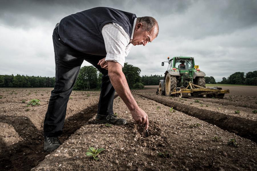 John Baker, Potato Grower