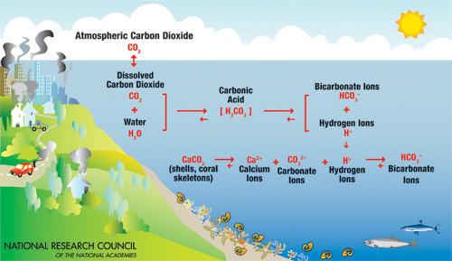 Carbon Dioxide -> Carbonic Acid