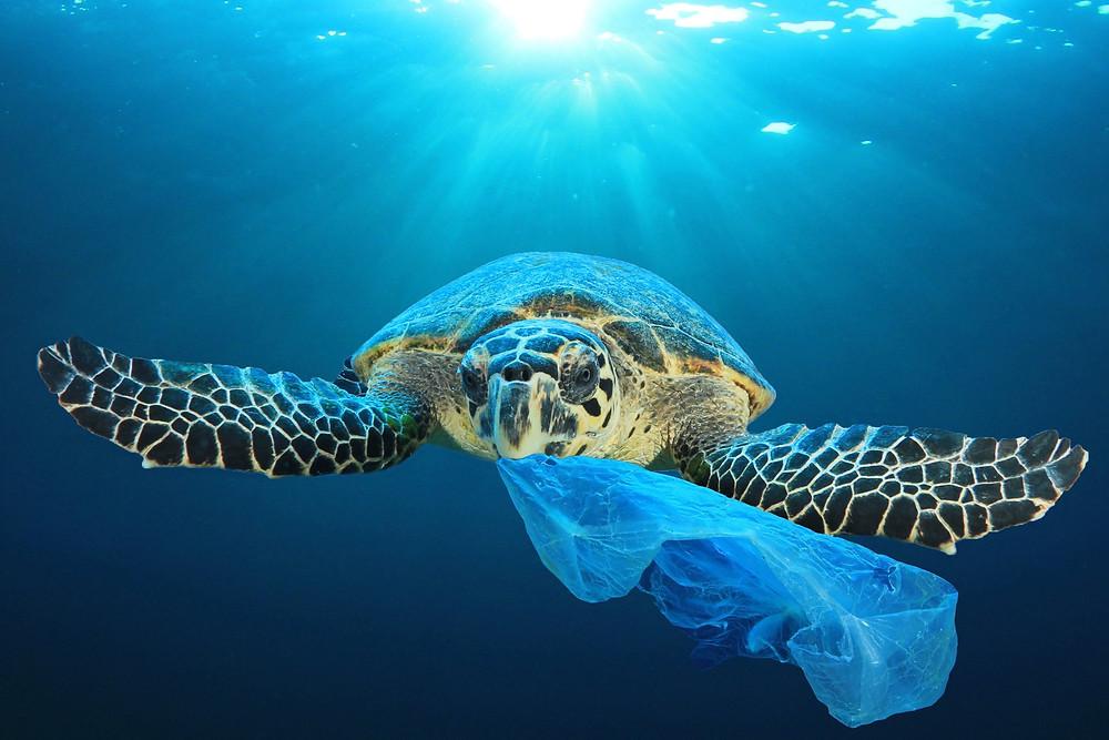 Turtle and Single Used Plastic Bad