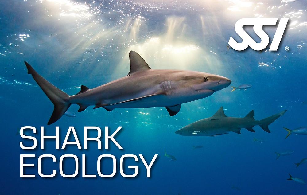 Like-A.Fish SSI Freediving Shark Ecology