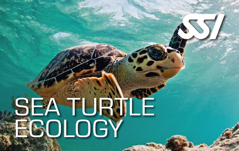 Like-A.Fish SSI Freediving Sea Turtle Ecology
