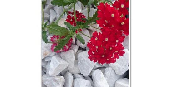 Carrara łamana 26-35 mm