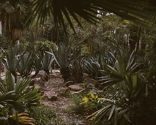 jungle 4.jpeg