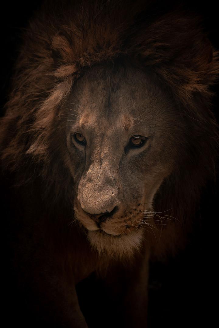 Lion2 2.jpg