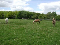 Heidi, Nina und Cora auf der Weide