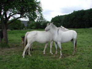 Cindy und Melodie