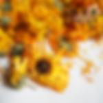 金盞花2.jpg