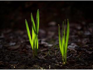 What we Feed, Grows; What we Starve, Dies