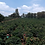 Thumbnail: Tanzania PB Usongwe Cooperative (GP)