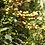 Thumbnail: Unroasted Ethiopia Yirgacheffe - Natural