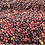 Thumbnail: Unroasted Colombia Supremo