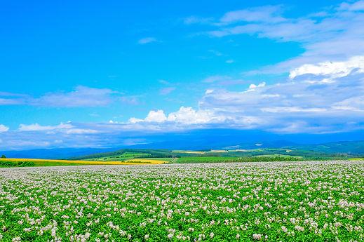 就実の丘.jpg