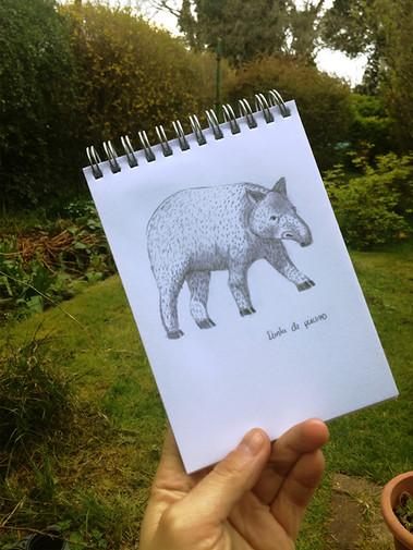 danta-paramo-moorlands-endangered-animal
