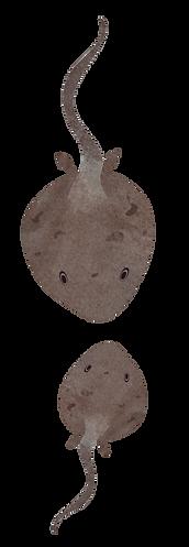 mantaray-fish-illustration-catalina-carv