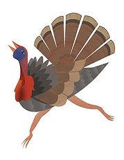 peacock-pavoreal-catalina-carvajal-illus