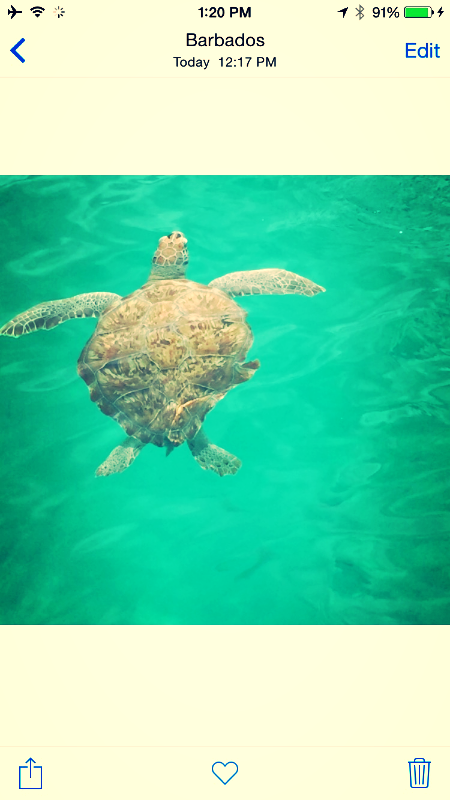 Our swim with the Turtles at Port Ferdinand Barbados.  Elli Travel Group is a Westchester based Travel Agency.  A Four Seasons Preferred, Rosewood Elite & Virtuoso Member.