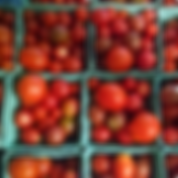 square tomatoes.PNG
