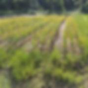 Field 4.jpg
