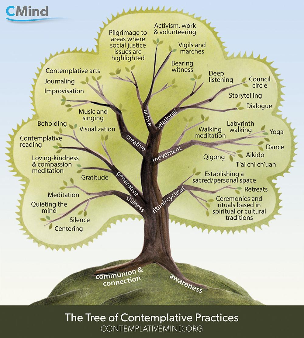 עץ פרקטיקות פדגוגיה מתבוננת מאוניברסיטת קולומביה