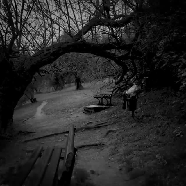 Il parco è sempre un bel posto per giocare ai serial killer 🔪 #Piovaschi  Musica cortesemente offerta da Audio Network, composta da Rob Kelly (PRS), Michael York (PRS), Duncan Pittock (PRS).