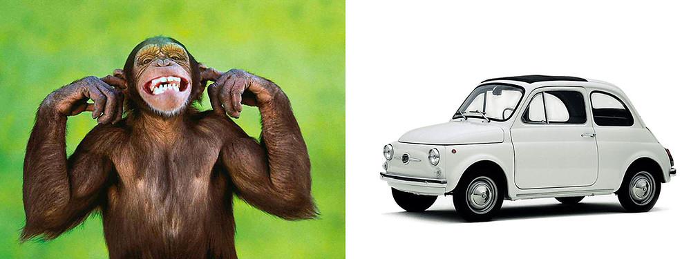 scimmia fiat 500
