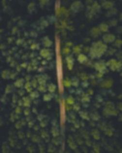 Waldvonobengrüngeraderweg.jpg