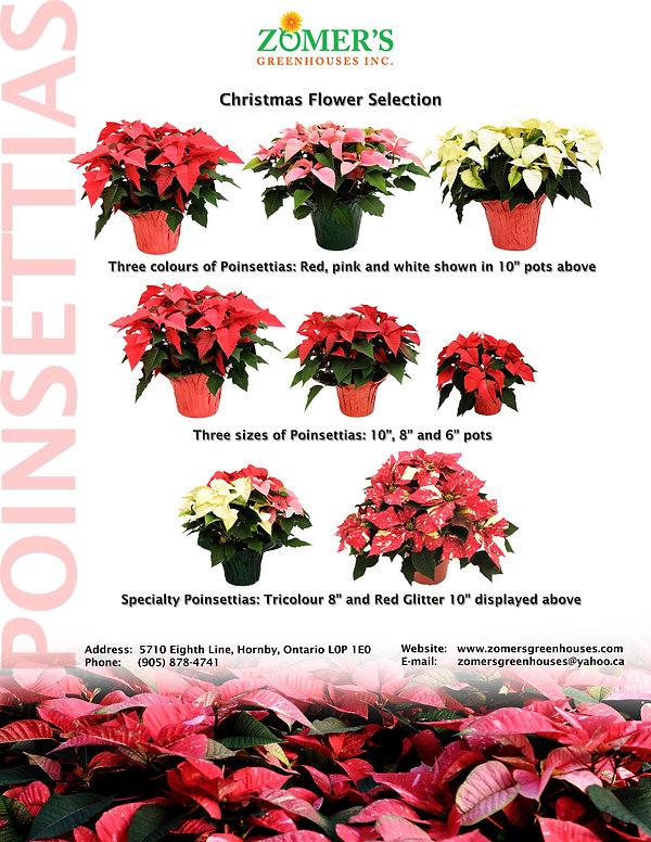 Poinsettia Information Sheet (HQ)
