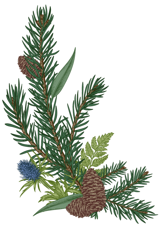 pine-and-thistle-single.png