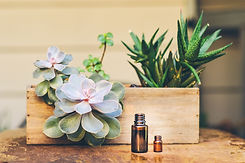 EO-bottle-with-succulent-wood-box-1.jpg