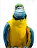Parrot with Mask.png