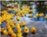 Rubber Duck.png