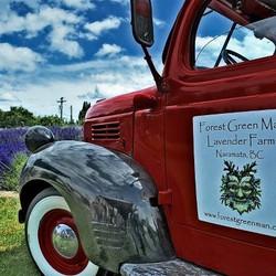 Our 1947 Fargo Lavender mobile....