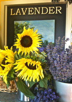 Lavender bunches, fresh and dried,