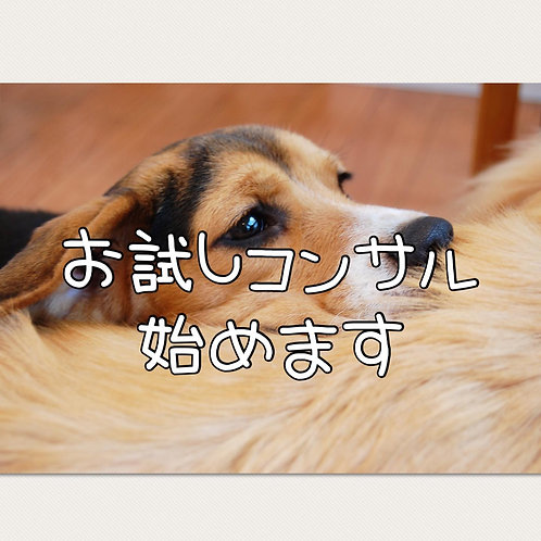 ■オンライン■お試しコンサル■