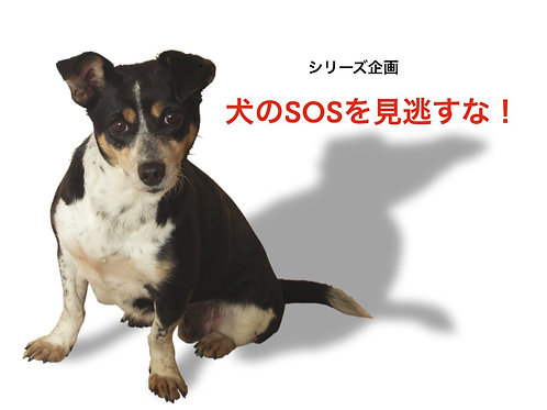 ◆オンライン◆犬のSOSを見逃すな!◆