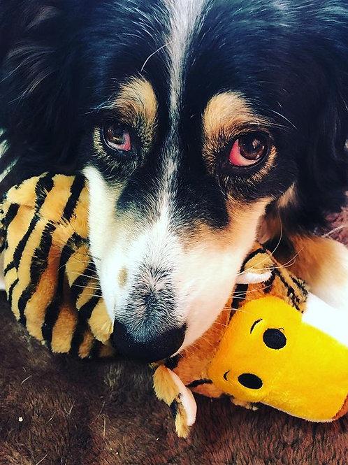 ◆オンライン◆愛犬生活基本のき~愛犬をストレスから守ろう!◆