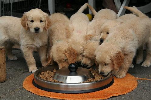 ◆食べない、飽きる、早食い・・・食の悩みが明日には改善!?愛犬ごはんの与え方◆
