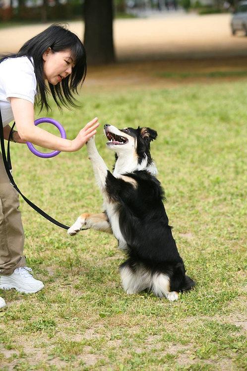■犬のトータルケア相談■