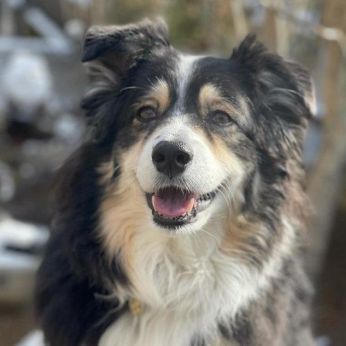 ◆OL◆犬を助けるために!◆2秒のボディランゲージをスローモーションで見られるようになろう◆