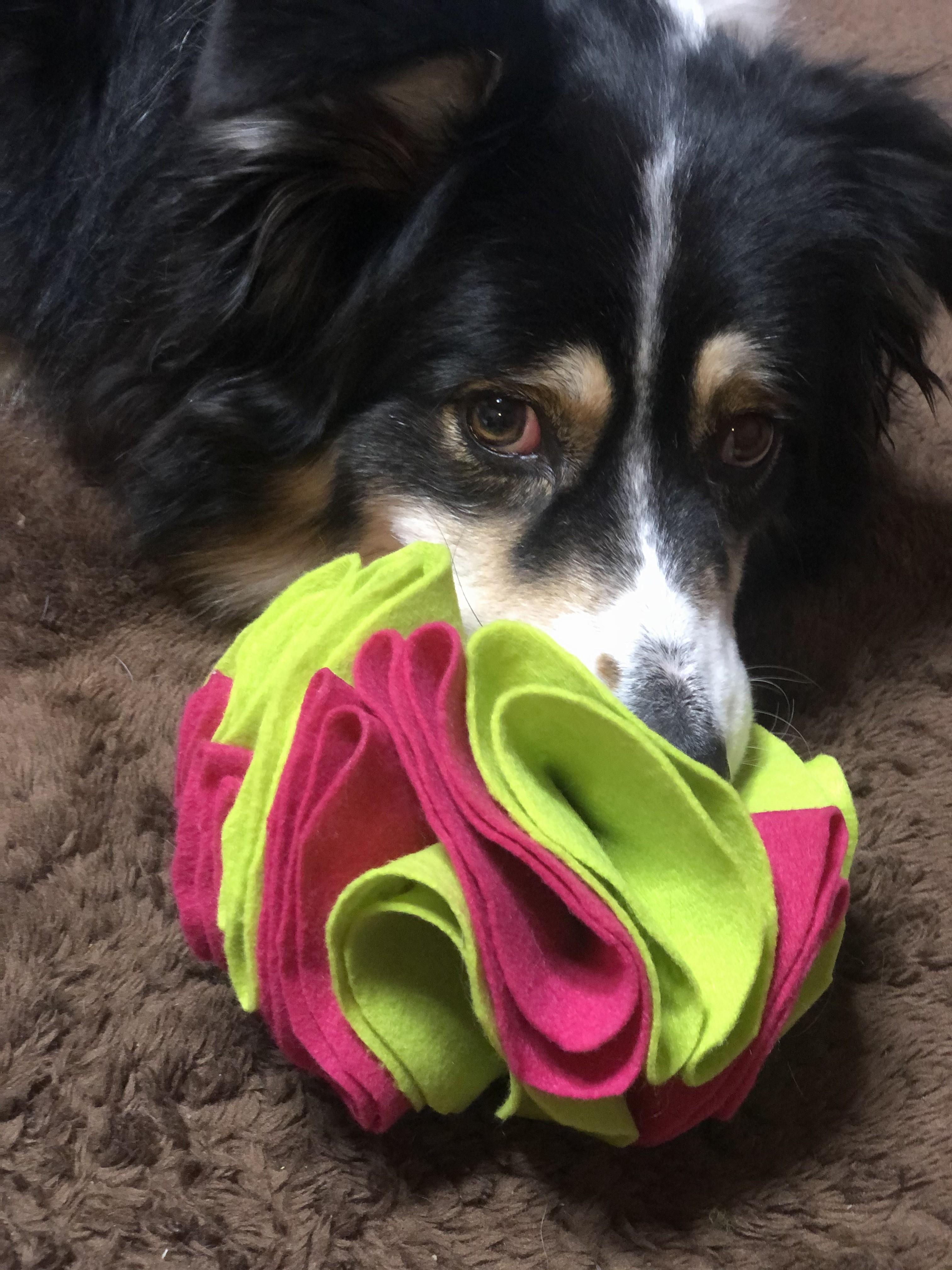 Thumbnail: ◆愛犬が夢中になる!魔法のマットとボールを作ろう◆